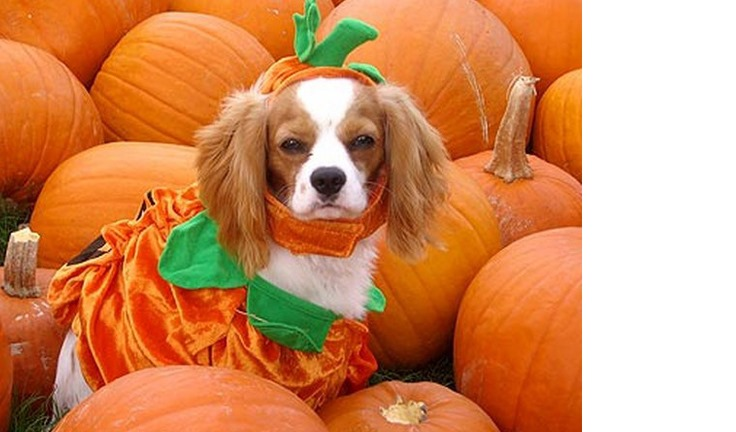 dog-pumkin-costumes-02.jpg