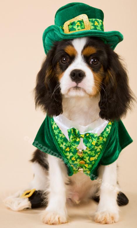st-patricks-day-puppies-02